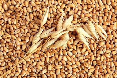 Технологии хранения зерна