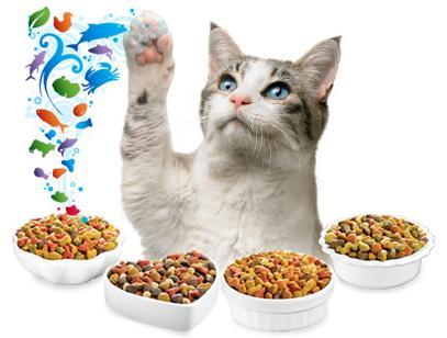 Чем и как правильно кормить котенка. Полезные свойства биотина.