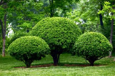Какие виды деревьев существуют?
